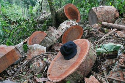 Khoảng 2m3 gỗ lậu bị thu giữ tại hiện trường nơi 4 kiểm lâm bị tấn công