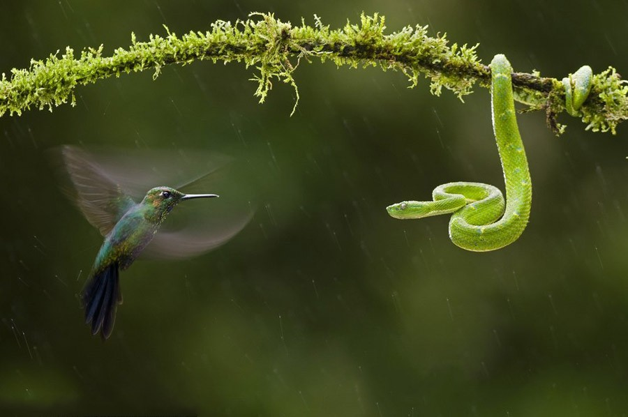 Một bức ảnh phong cảnh đẹp cần ghi lại từng khoảnh khắc chuyển mình của thiên nhiên