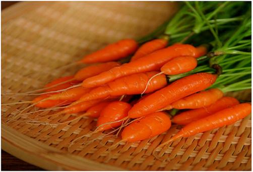 Với kỹ thuật trồng cây đơn giản, mọi người sẽ nhanh chóng có được những vườn cà rốt nhỏ xinh ngay tại nhà