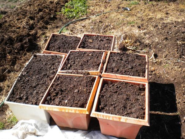 Chọn chậu và đất trồng là khâu đầu tiên trong kỹ thuật trồng cây cà rốt tại nhà
