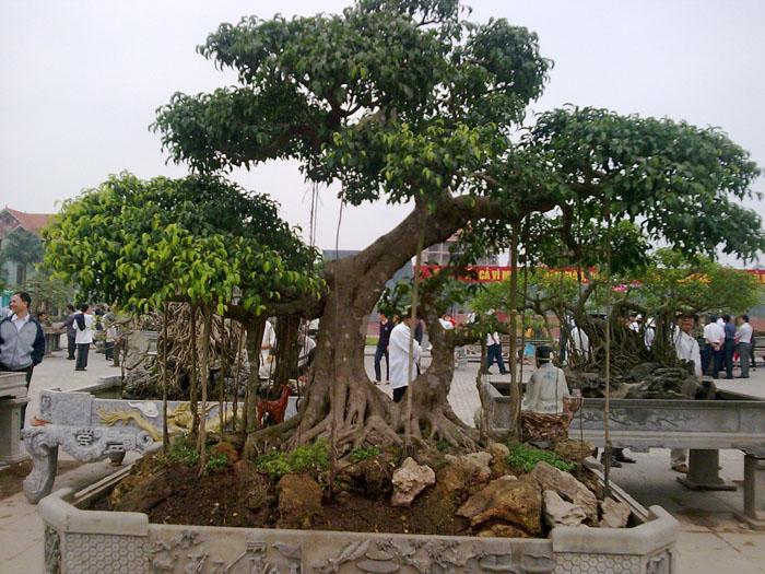 Kỹ thuật trồng cây cảnh đúng cách sẽ cho hiệu quả cây trông cao