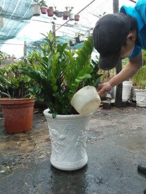 Người trồng tuân thủ theo các kỹ thuật trồng cây sẽ thu lại vẻ đẹp như mong muốn