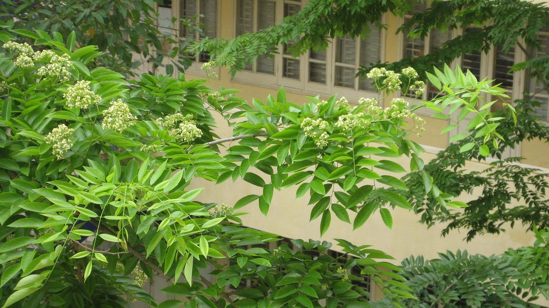 Loài thực vật này từ năm thứ 3 trở đi sẽ tự vươn thẳng đứng
