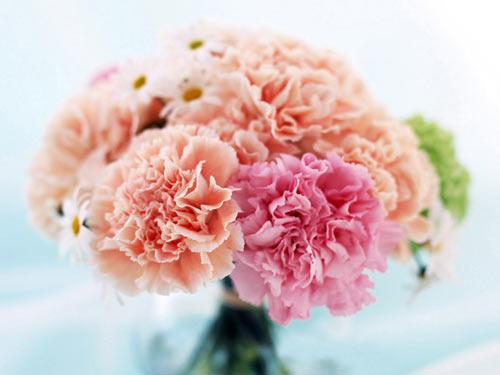 Kỹ thuật trồng hoa cát tường trong chậu sẽ cho ra những đóa hoa làm đẹp cho căn nhà
