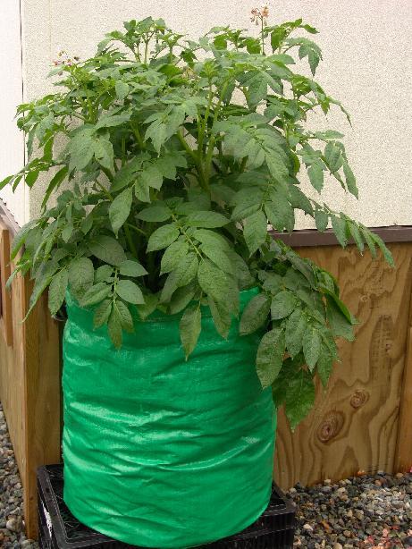 Có thể tận dụng các loại túi, bao tải không sử dụng đến để trồng cây