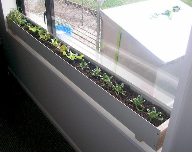 Kỹ thuật trồng rau trong hộp đơn giản lại tiết kiệm