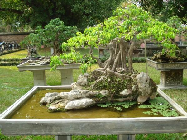 Bón phân không đúng kỹ thuật trồng cây nhiều khi còn có hại