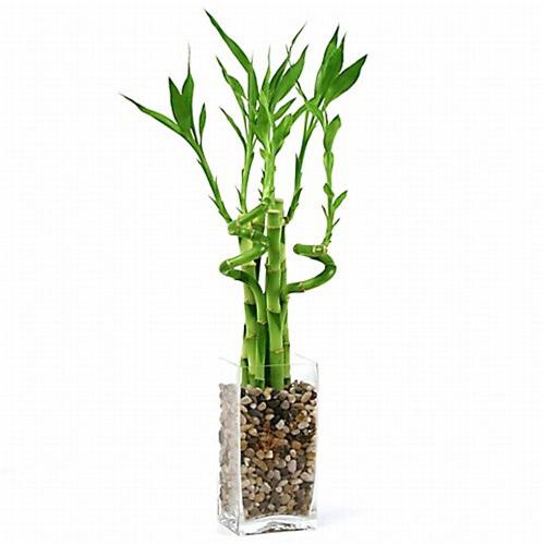 Do trồng trong nước nên rất cần chú ý tới yếu tố này trong kỹ thuật trồng cây