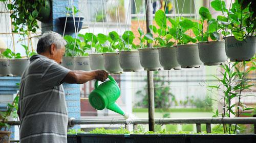 Cần chú trọng tưới nước trong kỹ thuật trồng cây rau sạch tại nhà