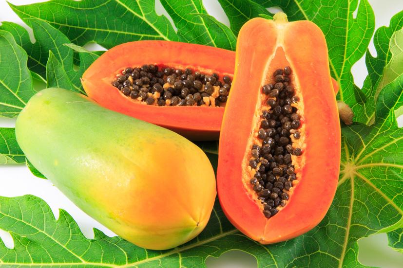 Không chỉ phần thịt quả, hạt đu đủ cũng có nhiều công dụng chữa bệnh