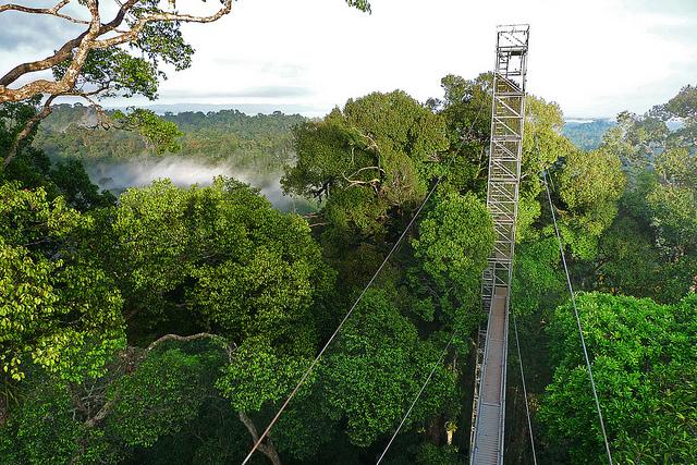 Cây cầu gỗ dài 7km ở Ulu Temburong
