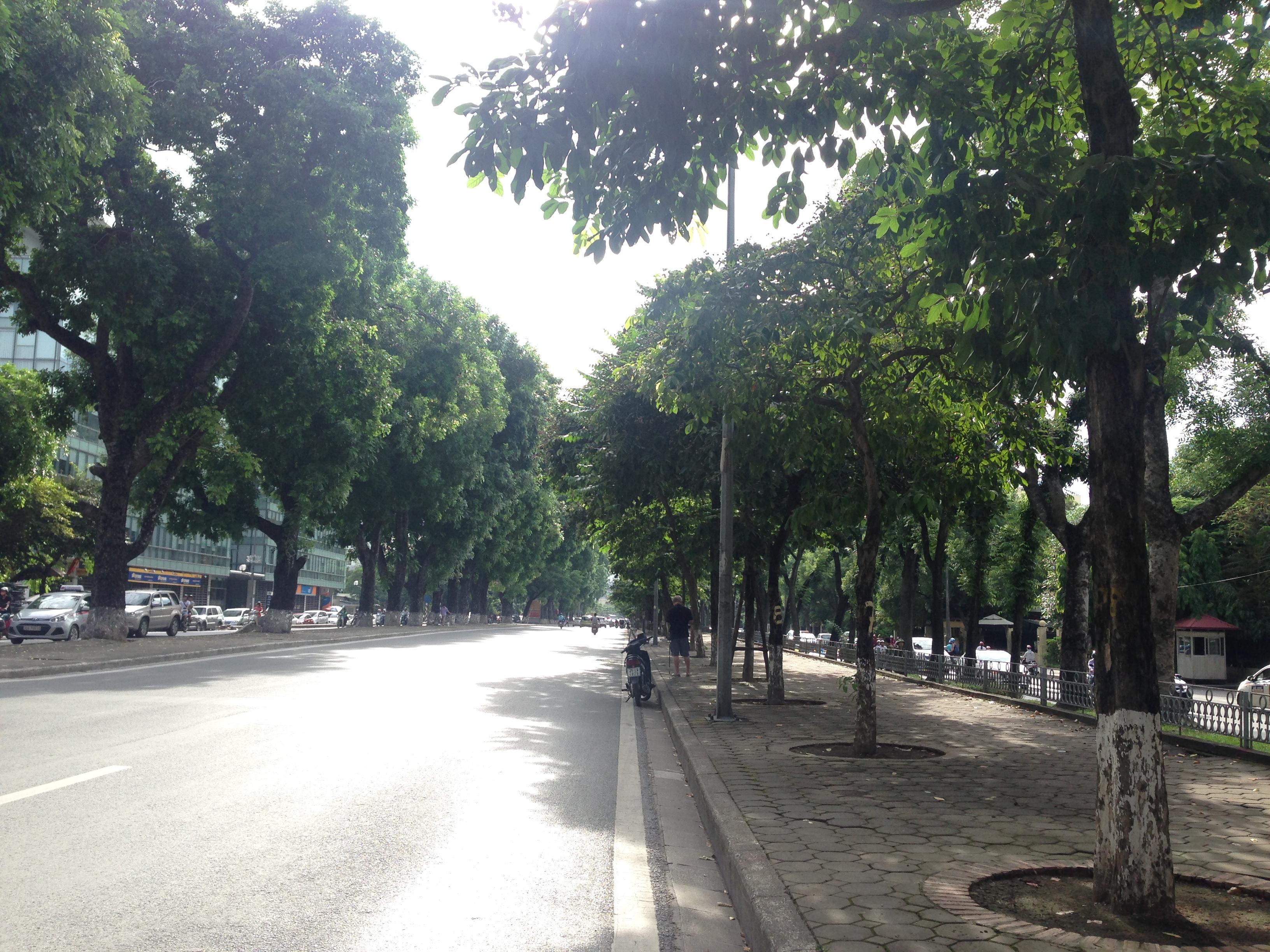 Những cây xà cừ cao lớn góp phần che mát cho hai bên đường