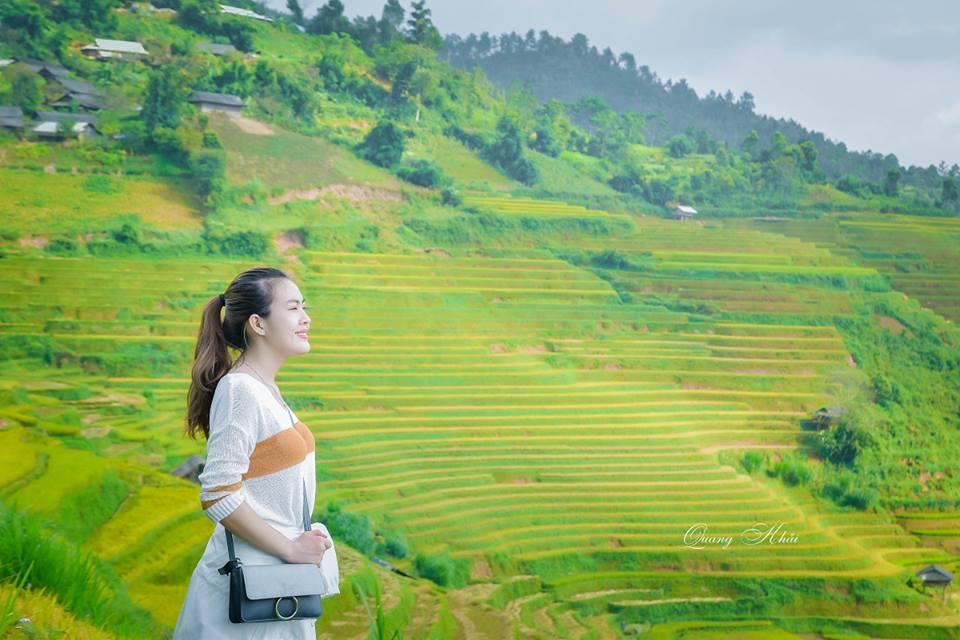 Những ruộng lúa trên Mù Cang Chải đang bắt đầu chín vàng