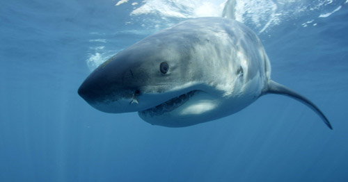 cá mập dự báo bão