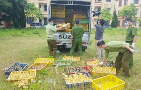 tin tức trong ngày: Dương tính với chất gây nghiện vì đồ ăn Trung Quốc