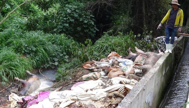 tin tức trong ngày: Xác lợn chết 'ngụp lặn' trên sông Sài Gòn