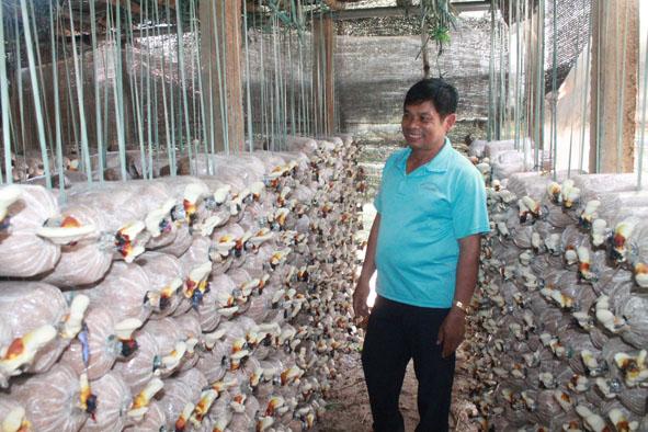 Đắk Lắk: Nâng cao năng suất nấm nhờ ứng dụng tiến bộ khoa học - công nghệ