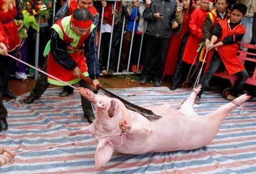 Có rất nhiều ý kiến tranh cãi gay gắt trong việc giữ hay bỏ Lễ hội chém lợn