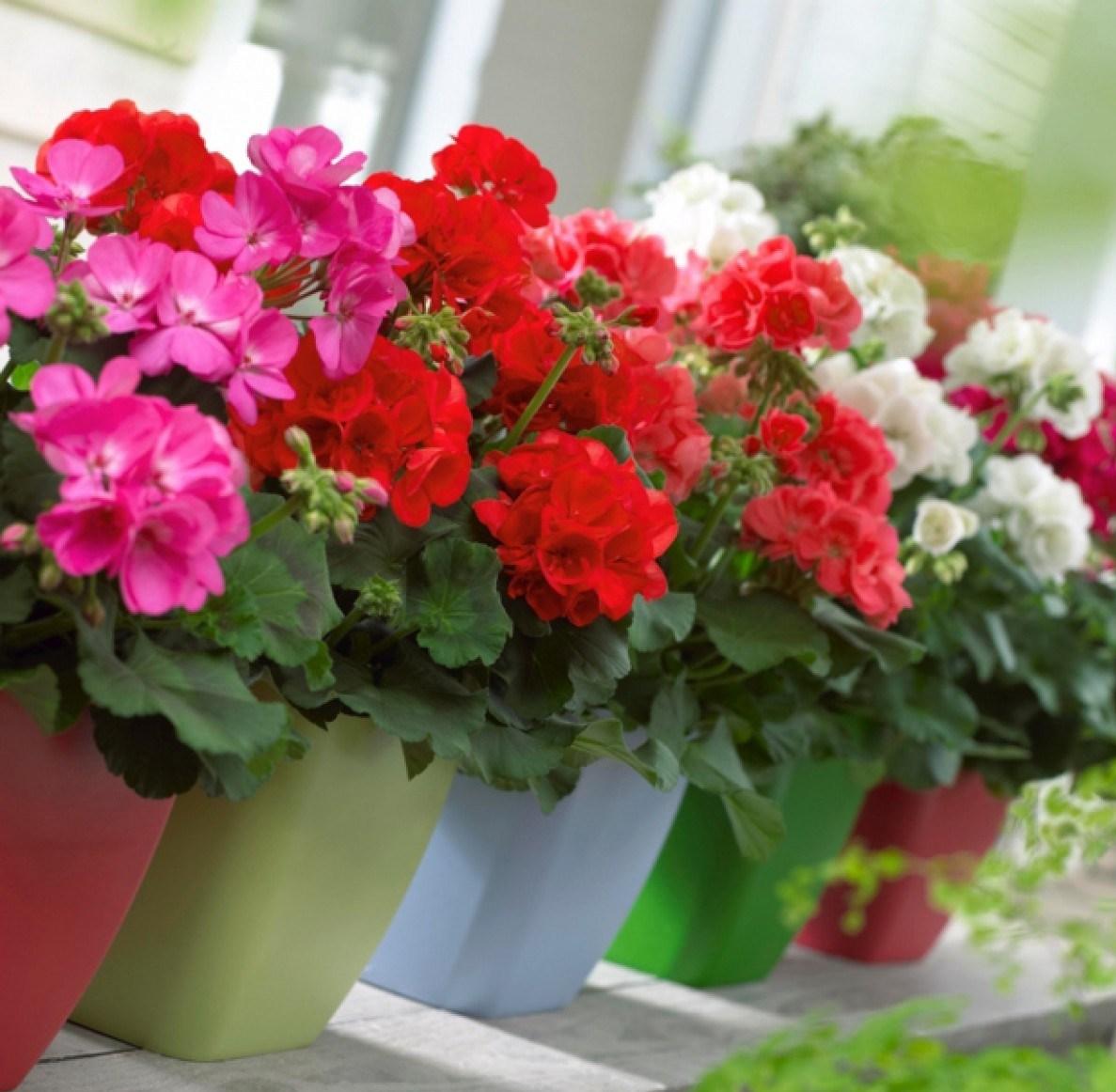Kết hợp nhiều loài hoa sẽ đem đến cho ngôi nhà thêm xinh.
