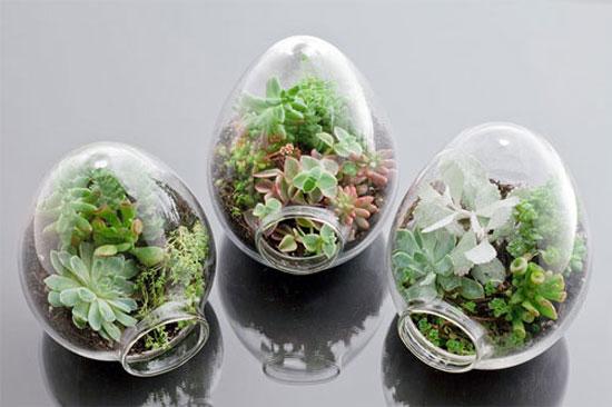 Kỹ thuật trồng cây cảnh trong lọ thủy tinh cực đáng yêu - ảnh 5