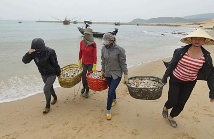 Bộ Tài Nguyên và Môi trường có công văn hướng dẫn tiêu hủy cá miền Trung.