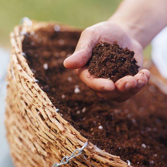 Đất trồng hoa mai phải tơi xốp.