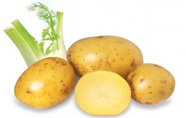Hàng ngàn ca bệnh tật Khoai tây cũng liên quan tới khoai tây. Ảnh minh họa