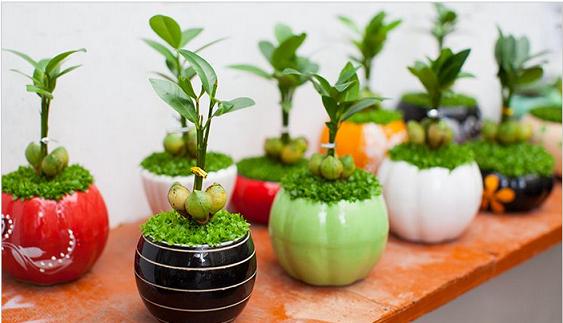 Kỹ thuật trồng cây may mắn mang tài lộc cho dân văn phòng - ảnh 6
