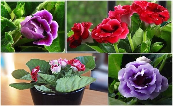 Trồng hoa chuông tình yêu đòi hỏi đất trồng phải đảm bảo tơi xốp. Ảnh minh họa