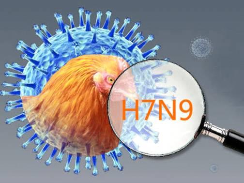 Thông báo về tăng cường biện pháp ngăn chặn vi rút cúm gia cầm A/H7N9 và các chủng vi rút cúm khác xâm nhiễm