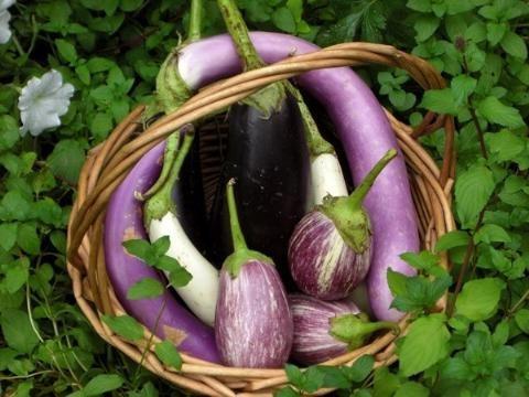 Cà tím là món ăn được nhiều người thích nhưng cà tím lại rất dễ gây ngộ độc. Ảnh minh họa