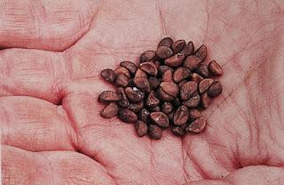 Kỹ thuật trồng cây rau muống bằng cách gieo hạt. Ảnh minh họa
