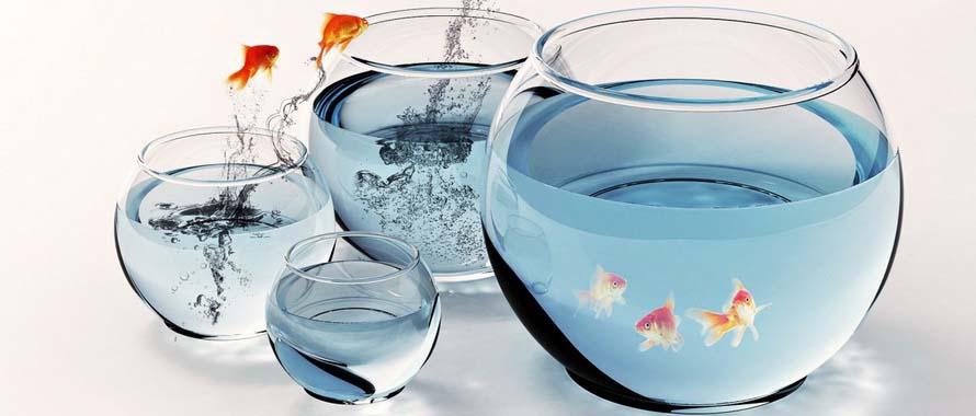 Kỹ thuật nuôi cá cảnh trong bình thủy tinh mini cần phải thay nước thường xuyên đảm bảo cá sống lâu. Ảnh minh họa