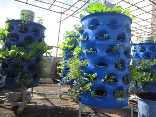 Kỹ thuật trồng rau sạch bằng ống nhựa cả nhà ăn không xuể - ảnh 1