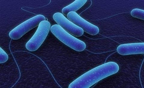 Nếu ăn phải thịt nhiễm vi khuẩn Clostridium botulinum gây tử vong. Ảnh minh họa
