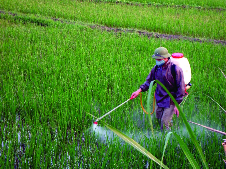 Thuốc bảo vệ thực vật chưa hoạt chất glyphosate còn tiềm ẩn nhiều nguy cơ gây hại sức khỏe. Ảnh minh họa