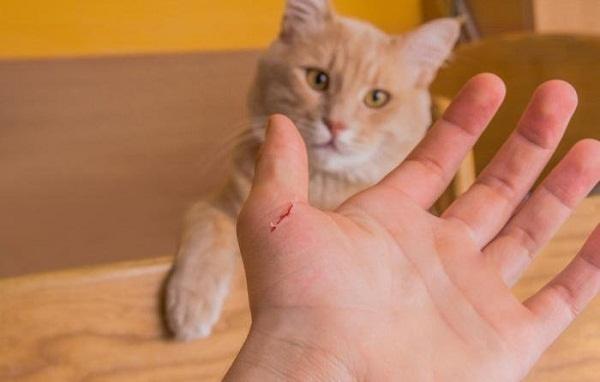 Bị mèo cắn có nguy cơ tử vong. Ảnh minh họa