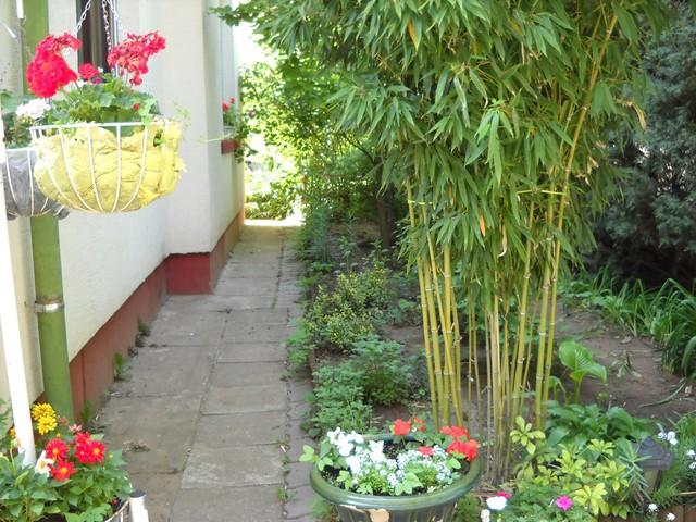 Kỹ thuật trồng cây tre cảnh quanh nhà mang may mắn cho gia đình. Ảnh minh họa