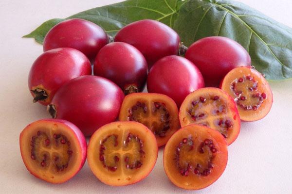 Kỹ thuật trồng và chăm sóc cây cà chua thân gỗ tuy hơi phức tạp nhưng cho thu hoạch khá cao. Ảnh minh họa