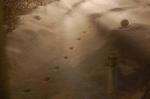 Những dấu chân xuất hiện và đột ngột biến mất không dấu vết khiến người dân liên tưởng tới ''dấu chân của quỷ''. Ảnh: Kiến thức