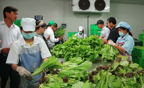 Thực phẩm được cho là sạch chưa chắc đã an toàn nếu không biết cách bảo quản. Ảnh: ANTĐ