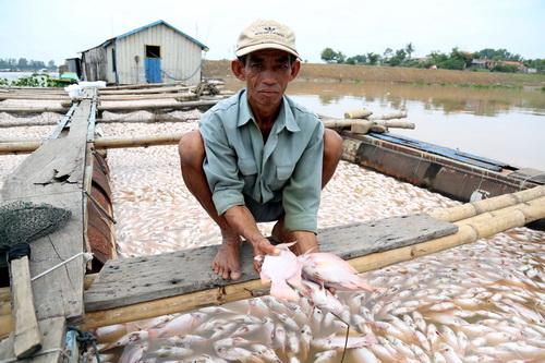 Cá chết trên sông La Ngà khiến người dân thiệt hại nặng nề. Ảnh: VnExpress