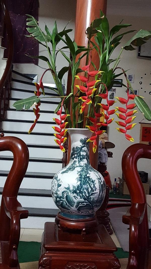 Cây chuối tràng pháo không chỉ đẹp rực rỡ mà còn mang nhiều ý nghĩa tươi mới cho ngôi nhà bạn.