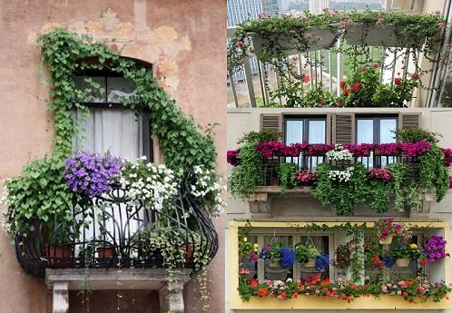 Trồng và chăm sóc cây hoa ngoài ban công cần lưu ý những gì? - ảnh 1