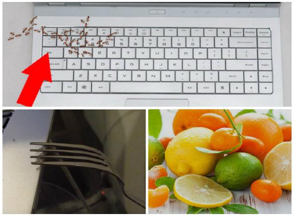 Kiến hay côn trùng khác chui vào máy tính người dùng hoàn toàn có thể đuổi chúng đơn giản