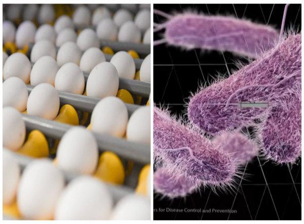 Trứng nghi nhiễm khuẩn bị thu hồi ở một số nước
