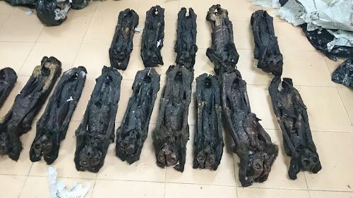 20 cá thể linh trưởng sấy khô chưa xác định được phát hiện trên xe khách hướng về Hà Nội