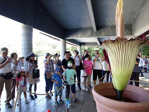 Loài hoa có mùi nồng nặc như xác chết. Ảnh: AFP
