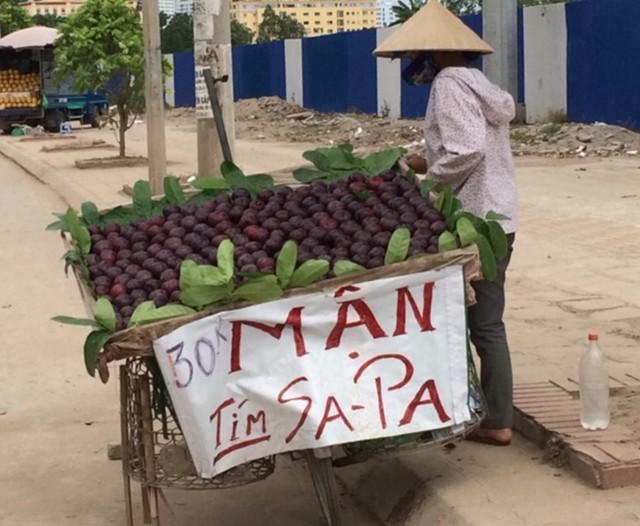 Mận tím Sapa vẫn được bày bán tràn lan tại Hà Nội mặc dù đã hết mùa cách đây gần 2 tháng
