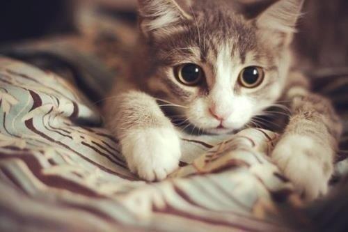 Mèo sẽ ngay lập tức vồ lấy những con nhện ngay khi nhìn thấy